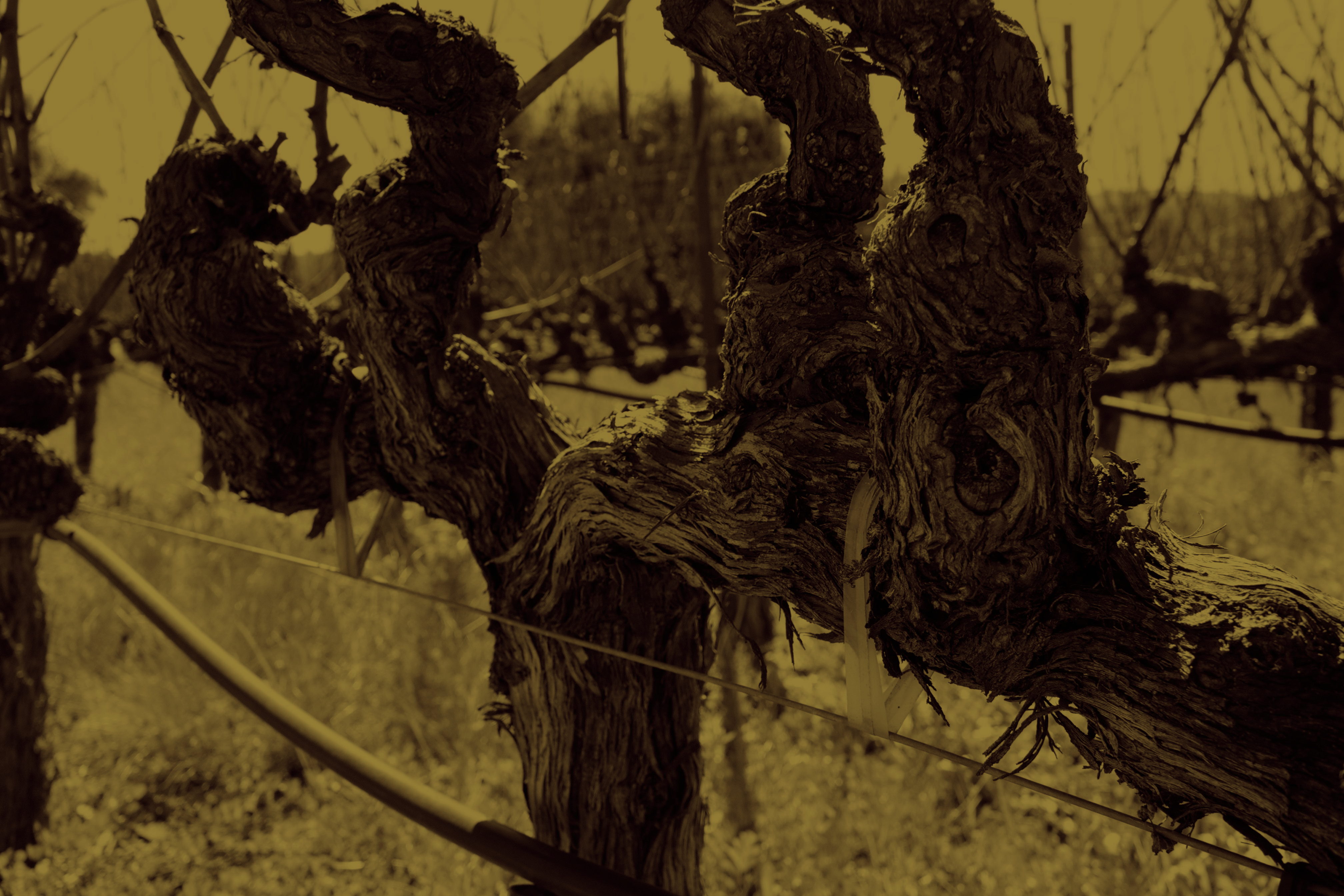 winebranch